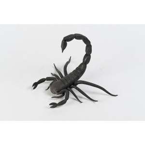 Zodiac – Scorpio